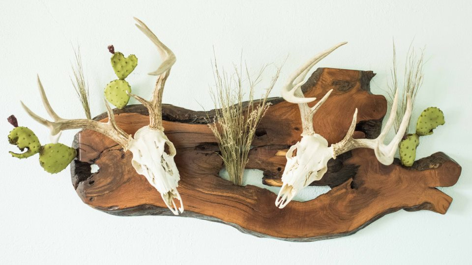 Taxidermy plaques mount your deer turkey or antlers today for Turkey fan mount template